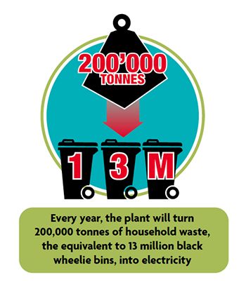 Every year, the plant will turn