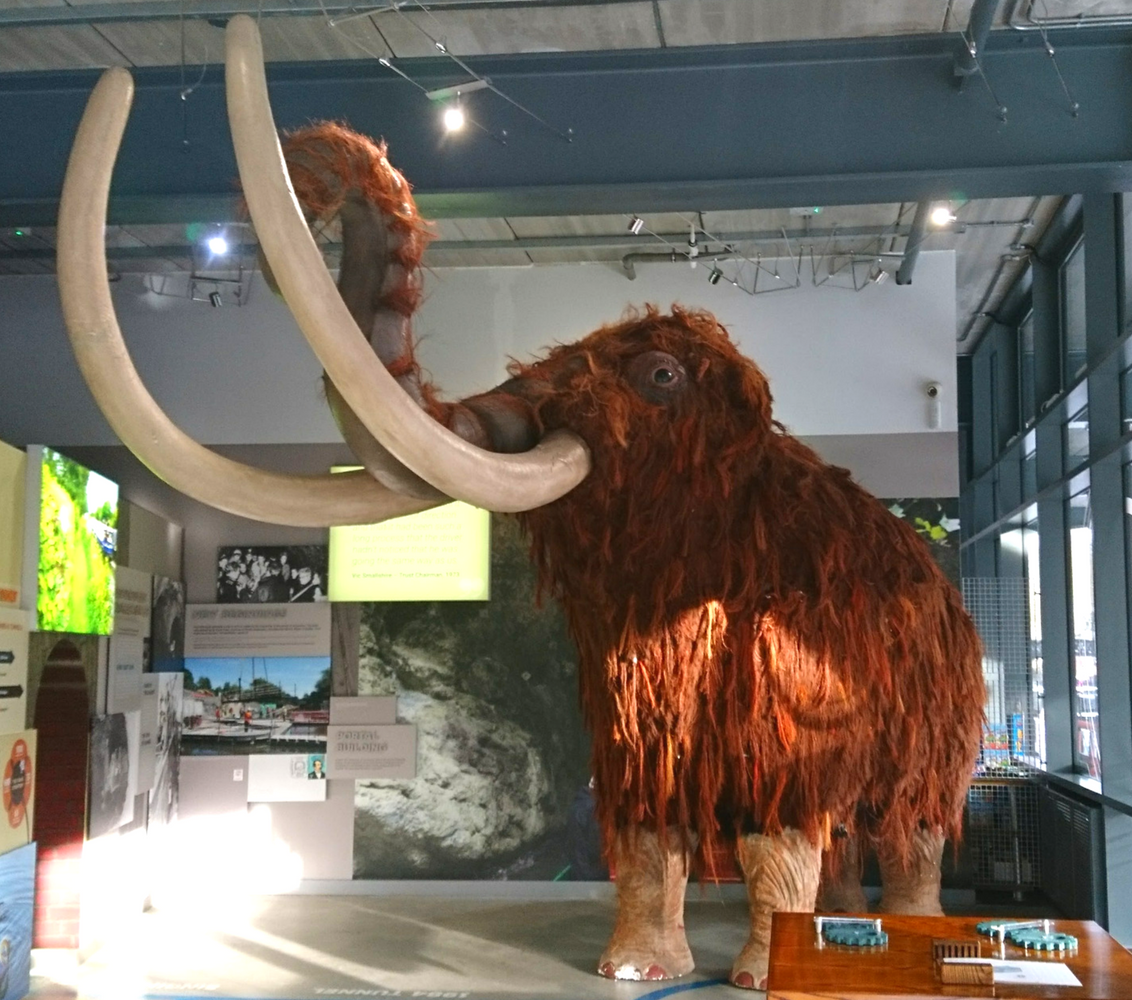 Come and meet Fluffy, the woolly mammoth