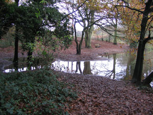 Hillditch Pool and Coppice
