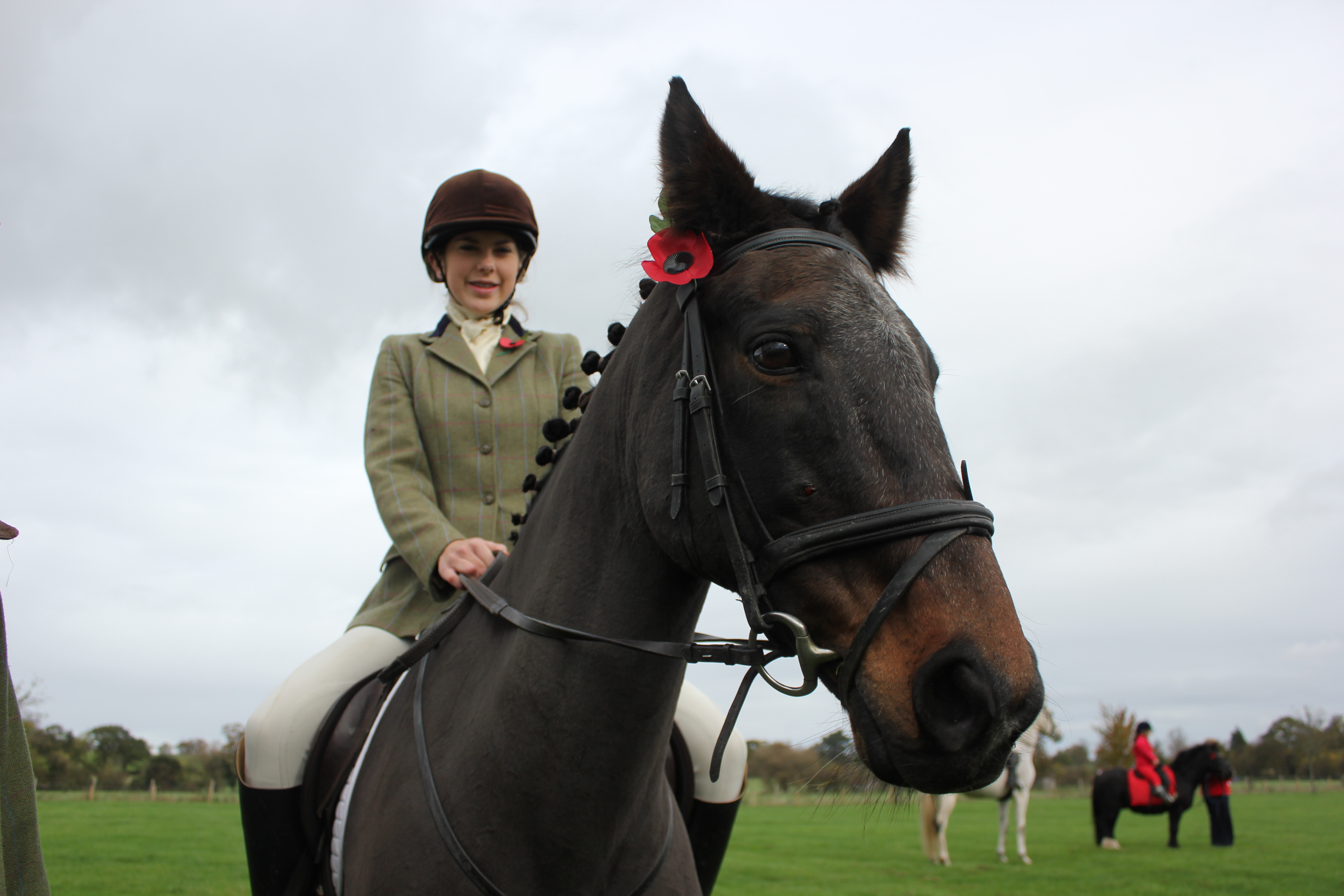 First World War service to recognise sacrifices of horses
