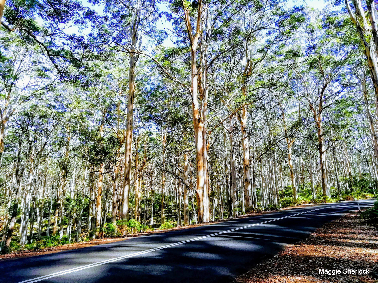 Image of a forest by a road by Maggie Sherlock