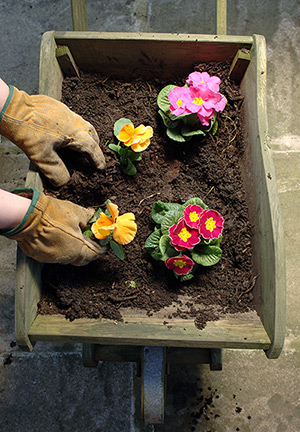 You can plant flowers directly into your compost